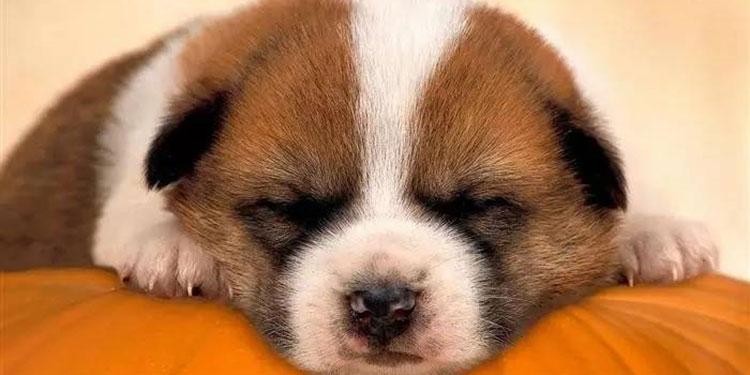 优秀的程序员才不会觉得累成狗是一种荣耀!